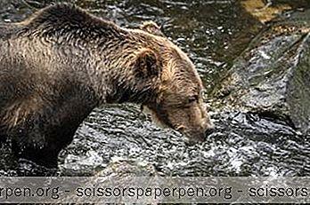 15 Cele Mai Bune Lucruri De Făcut În Cooper Landing, Alaska
