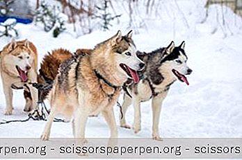 Приключение - 15 Най-Добрите Неща За Вършене В Wasilla, Аляска