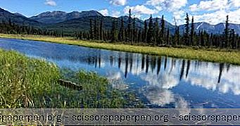 16 Die Besten Aktivitäten In Soldotna, Alaska