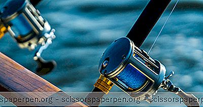 การผจญภัย - ตกปลา Chesapeake Bay
