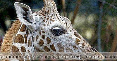 Hal Yang Dapat Dilakukan Di Hongaria: Kebun Binatang Budapest