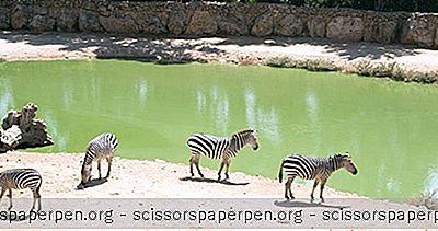 Izraelis, Ką Reikia Padaryti: Biblijos Jeruzalės Zoologijos Sodas