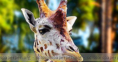 การผจญภัย - ลัตเวียสถานที่ท่องเที่ยว: สวนสัตว์ริกา