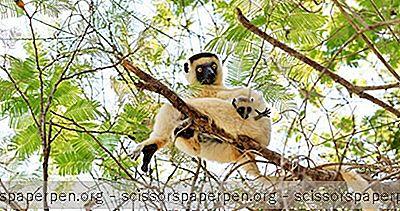 Avontuur - Dingen Om Te Doen In Madagaskar: Kirindy Forest
