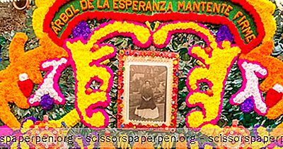 Неща За Правене В Мексико: Музей На Фрида Кало