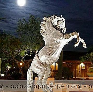 Trang Trại Stallion Trắng Ở Tucson, Az