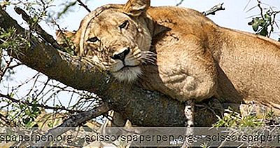 Wildplaces Africa - Camps Et Lodges Uniques En Ouganda