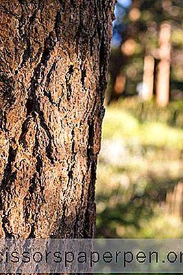 25最佳露营地在亚利桑那州