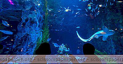 Los Mejores Acuarios Del Mundo: El Acuario De Dubai Y El Zoológico Submarino