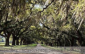 Boone Hall Plantation & Gardens, Carolina De Sud