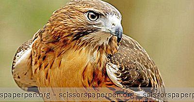 Дулут, Минесота: Обсерватория За Птици Хоук Ридж