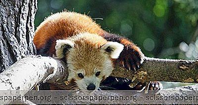 Atrakcije - Greenville Zoološki Vrt U Greenvilleu, Južna Karolina