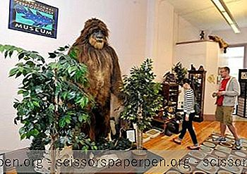 International Cryptozoology Museum In Portland, Maine
