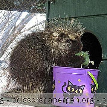 亚利桑那州斯科茨代尔西南野生动物保护中心