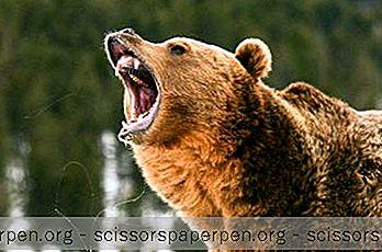 Неща, Които Трябва Да Правите В Бисмарк: Зоологическата Градина В Дакота