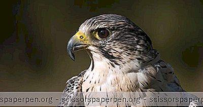 Atracciones - Cosas Que Hacer En Boise, Idaho: Centro Mundial Para Aves Rapaces