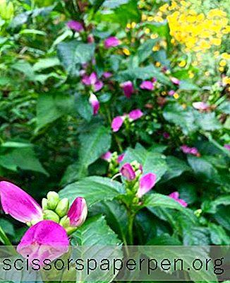 Атракции - Неща, Които Трябва Да Правите В Шарлът, Щата: Ботанически Градини Uncc