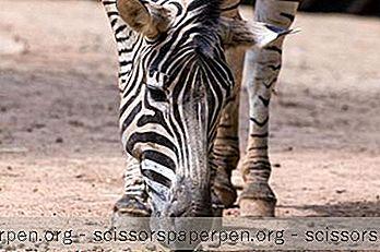 Activités À Faire À Detroit, Michigan: Le Zoo De Detroit