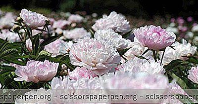 Choses À Faire À Fort Collins, Colorado: Les Jardins De Spring Creek