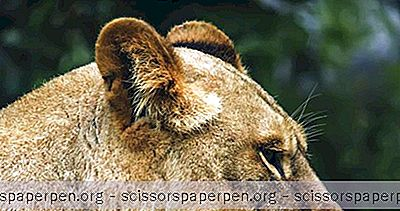 สิ่งที่ต้องทำในเฮอร์ชีย์, ปา: สวนสัตว์สัตว์ป่า North American Zoo