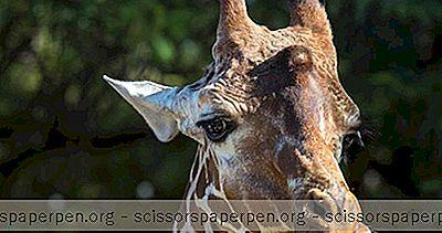 Атракции - Неща, Които Трябва Да Правите В Индианаполис, Индиана: Индианаполис Зоопарк