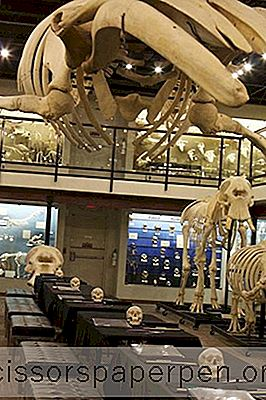 Attracties - Dingen Om Te Doen In Oklahoma City: Museum Of Osteology