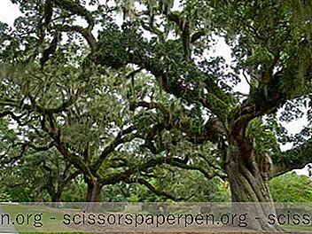 Dienvidkarolīnā Darāmās Lietas: Brookgreen Gardens