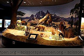 Tekemistä Wilmingtonissa: Delawaren Luonnontieteellinen Museo