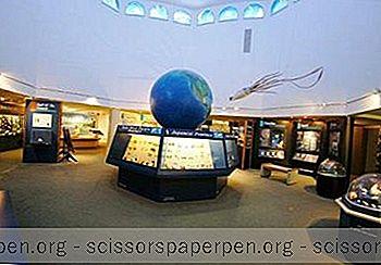 Choses À Faire Sur L'Île De Sanibel: Bailey-Matthews National Shell Museum