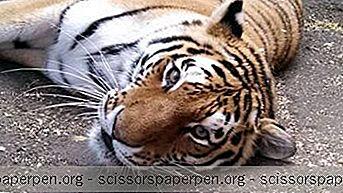 Вилмингтон, Делаваре: Зоолошки Врт Брандивине