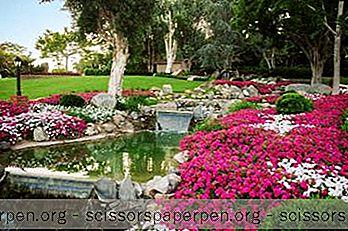 Những Điều Cần Làm Ở Fallbrook, California