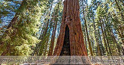Beste Dagsturer Fra San Francisco: Sequoia Og Kings Canyon Nasjonalparker