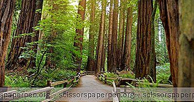 Les Forêts De Séquoias De Californie