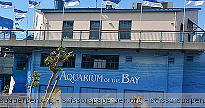 Co Robić W San Francisco, Kalifornia: Aquarium Of The Bay