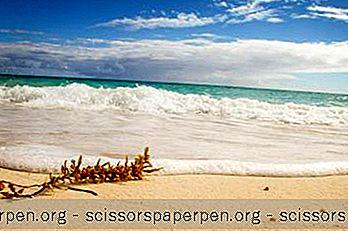 Les Meilleures Choses À Faire À Freeport (Bahamas)