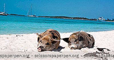 5巴哈马群岛最佳