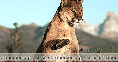 Pagosa Springs, Co Lucruri De Făcut: Rocky Mountain Wildlife Park