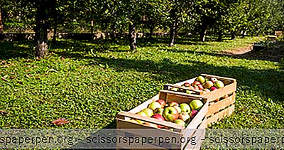 4 Die Besten Apple Picking Spots In Connecticut