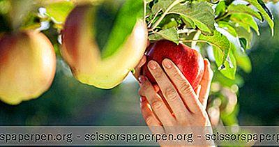 Najbolja Mjesta Za Branje Applea U Connecticutu