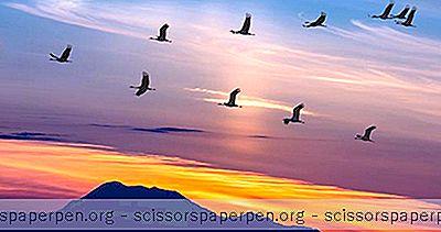 Observação De Aves No Arizona
