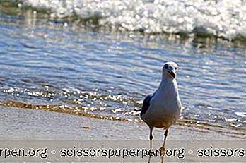 6在佛罗里达州格雷顿海滩做的最佳活动