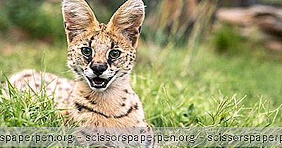 Gainesville, Fl Cosas Que Hacer: Carson Springs Wildlife Conservation Foundation
