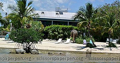 Romantické Pobyty Na Floridě: Deer Run Bed And Breakfast, Big Pine Key