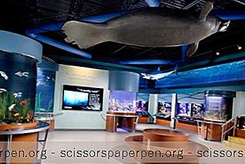 South Florida Science Center And Aquarium In West Palm Beach