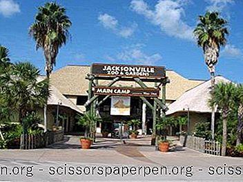 Tekemistä Floridassa: Jacksonvillen Eläintarha Ja Puutarhat