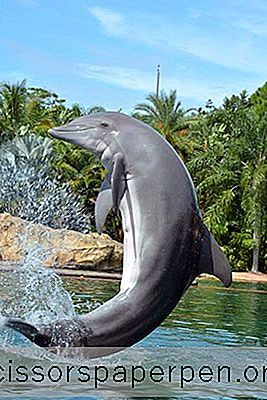 Ting At Gøre I Orlando, Florida: Discovery Cove