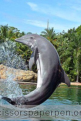 Tekemistä Orlandossa, Floridassa: Discovery Cove