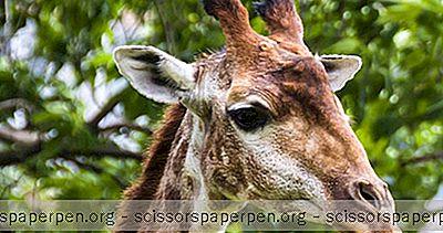 Zoológico De Birmingham