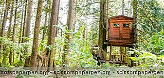 Treehouse Point, Een Natuurgebied In De Buurt Van Seattle, Washington