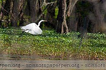 25 Công Viên Tốt Nhất Louisiana